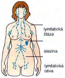 lymfosystem